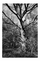 Hainault forest 2 by spurs06