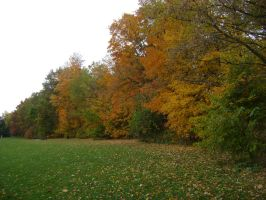 Canadian Fall Colours 45 by Aswang301