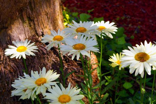 Please Don't Eat the Daisies by the-shutterbug