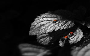 Leaves and Ladybirds by MeGustaDeviantart