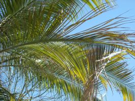 Palms in the Sun by Enalon