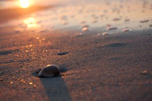 Sunrise and Shell by Kafteros-Okeanos