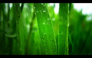 Wall - Pearly Greens 1920x1200 by beanhugger