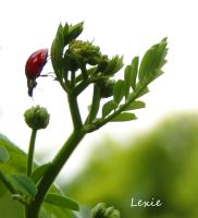 lady bug adventures by lexie11