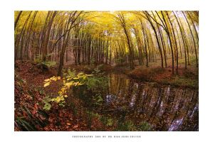 The rise of fall - fisheye by DimensionSeven