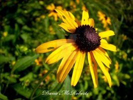 Flower by danamcroberts0429