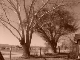 Sepia trees by SquirrelWitch