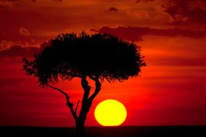 My Africa 64 by catman-suha