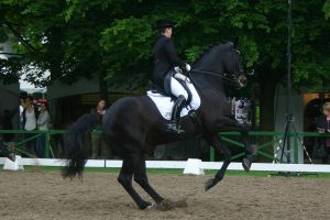 Dressage Canter Pirouette Stock 01 by LuDa-Stock
