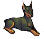 Doberman by bawky