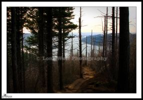 Angel's Rest 3 by LoneWolfPhotography