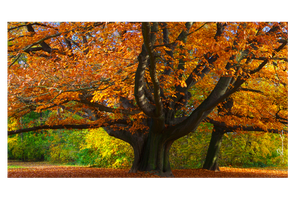 Autumn tree by Kunstlab