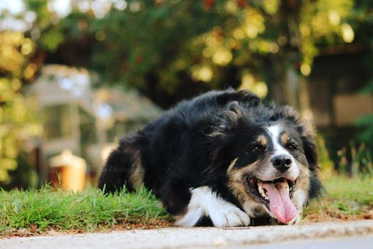Happy Pooch by KAMEPhotography