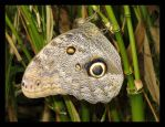 Snake...or....Butterfly by chris333593