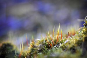 Sunset Moss by InLightImagery