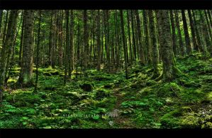 In the wood III HDR by firegold