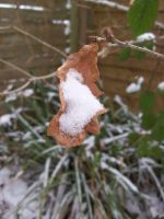 Snow in a leaf by janciss