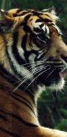 Wildlife Bookmark: Tiger by Cherry-Cheese-Cake