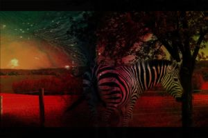 Zebra. by BlackRoseImmortal666