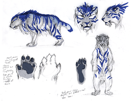 Tyger Anatomy Sketches by plangkye
