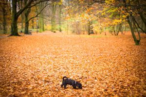 Dog in the Park by Freggoboy