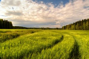 Over the fields and far away by Floreina-Photography