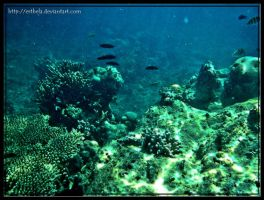 Tidung Underwater 2 by esthela