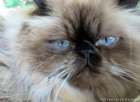 Blue eyes by FrancescaDelfino