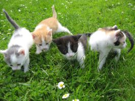 4 Little cats.. by Nipol