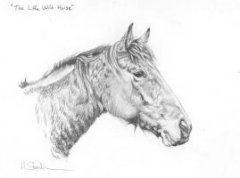 """The Little Wild Horse"" by Utlah"