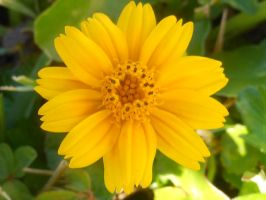 Yellow Flower by willow1894