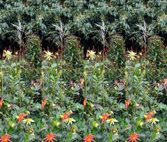 Impossible Single Stem Ornamental Grass Stereo by aegiandyad