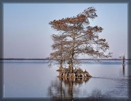 Lake Mattamuskeet 40D0032471 by Cristian-M