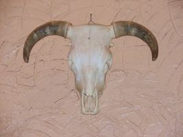 Western Horned Bull Skull by FantasyStock