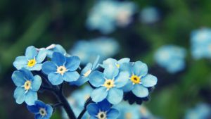 Blue blue blue flowers by turbonisia