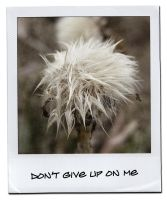 Don't Give Up On Me by imthinkingoutloud