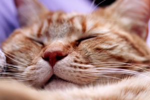 Cat Nap. by MaryannKeppler