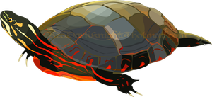 Painted Turtle by KreepingSpawn