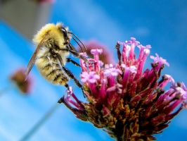France Bee by stephane-bdc