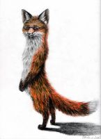 Imma Fox Standing! by coonotafoo