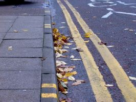 Leaves On Curb by StooStock
