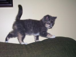 My Kitten Daisy by Narzaria