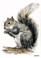 Squirrel by D-MAC
