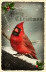 Cardinal Christmas card design by doormouse1960