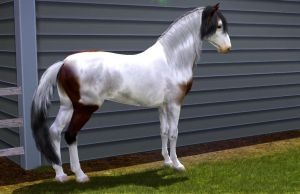 Blanco by MagicWindsStables