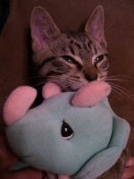 My kitty with his toy by AJLeefan4life