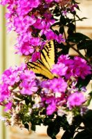 Hiding in Beauty by Lynalee