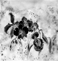 Black orchids by LisaLins