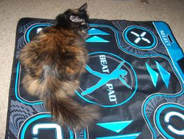 The cat who plays DDR? by AnH0nestMistake