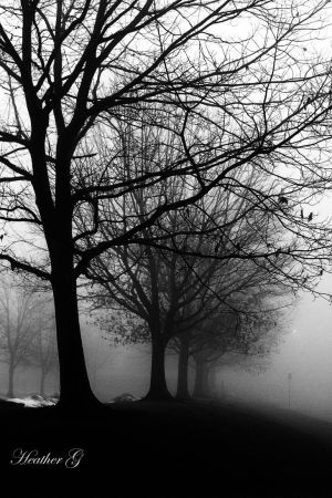 Foggy Morning BlackandWhite by CASPER1830